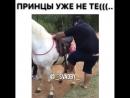 лишний вес и на лошади лишний!