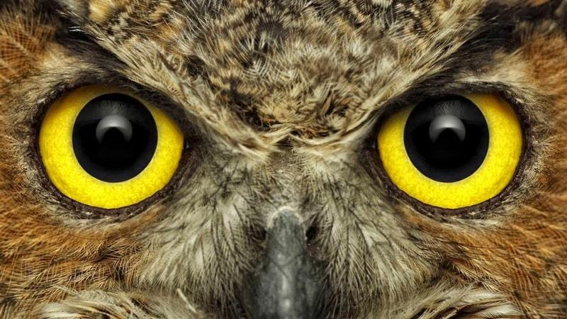Стереотипы о животных, в которые мы верим
