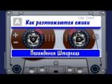 Похождения Штирлица (1) Как размножаются ежики (аудиокнига)