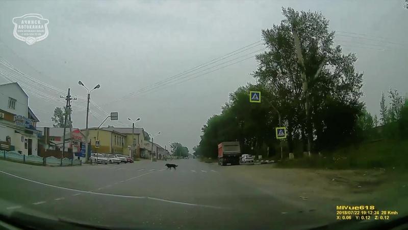 17.09.2018 Ачинск. Собака на пешеходном переходе ул. 5-го Июля