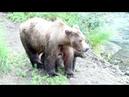 Медведи на рыбалке 0001