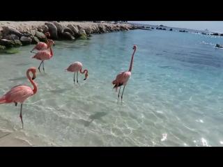 Багамские острова. Интересные факты о Багамских островах