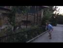 Смельчак играет с большой кошкой наперегонки