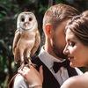 Свадебный фотограф Москва   фотограф на свадьбу