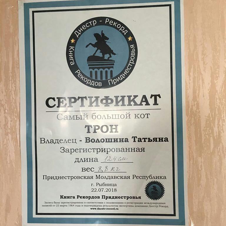 Катюша Якимович   Москва