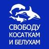 Свободу косаткам и белухам - Free Russian Whales