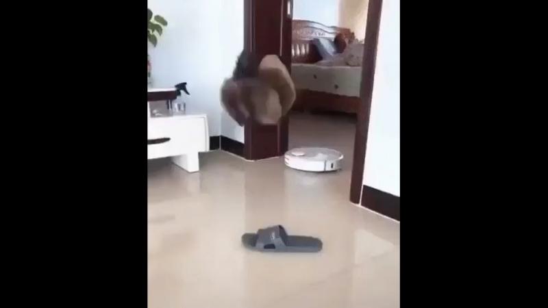 Кот паркурист какой то