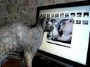 Украинский левкой. Чушка смотрит кино.mpg