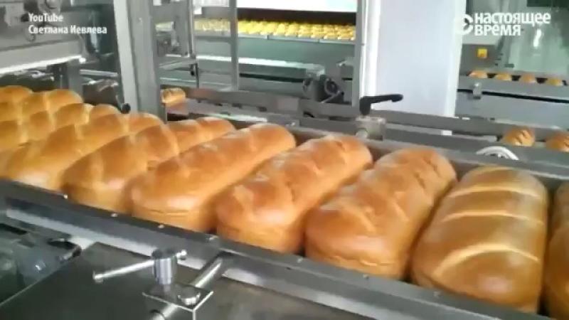 В России пекут хлеб из пшеницы для скота.