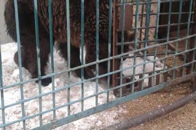 В Донецкой области со скандального частного зоопарка изъяли пять медведей