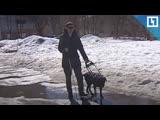 Пьяный избил слепого пенсионера и его собаку-поводыря