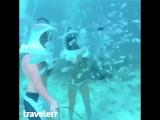 Когда вышел из отеля покормить рыбок