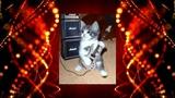#cat #cover #classic_rock