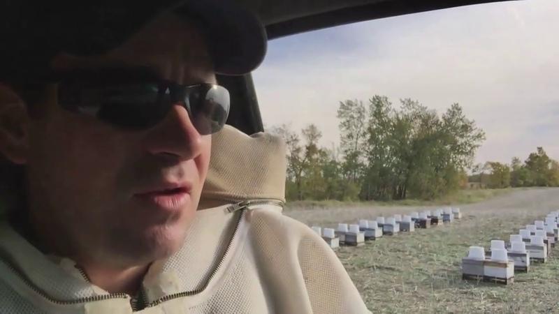 Иан Степплер: подкормка ведерными кормушками (Канада)