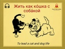 Жить как кошка с собакой 🐈🐕. Translation To live like a cat with a dog. English expression To lead a cat and dog life. Example Мои соседи такие шумные! Они живут как кошка с собакой! My neighbours are so noisy! T