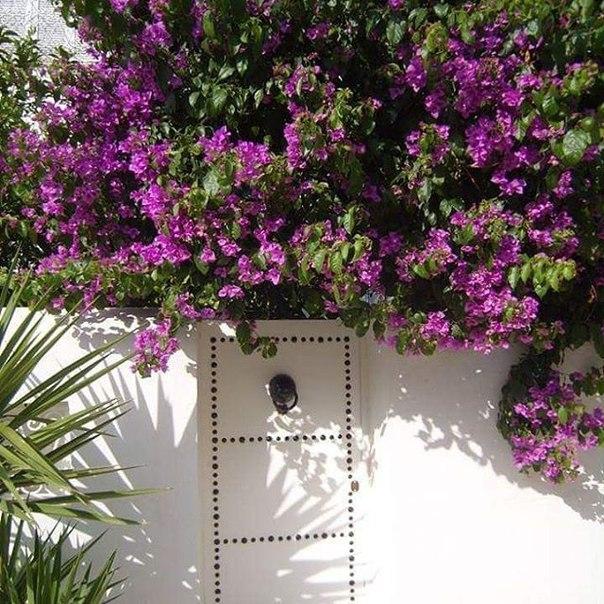 🔥 СУПЕР: туры в Тунис на 6 ночей со «все включено» за 15300 с человека