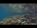 Мангровый биотоп, кораллы, актинии, рыбы.