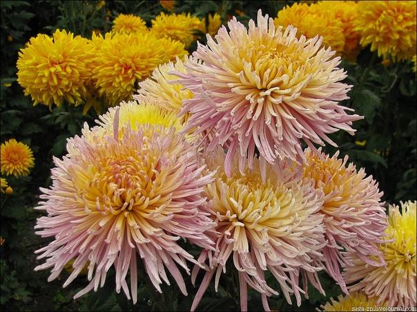 12 сентября - День осенних цветов