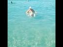 Плывущий по волнам 🌊🌊 🌊