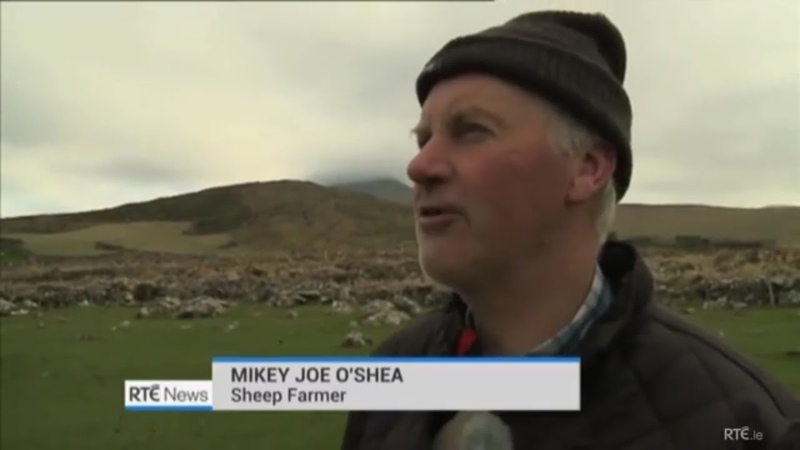 IRISH FARMER'S STRONG ACCENT IN COUNTY KERRY IRELAND MISSING SHEEP