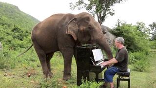 Британец играет на пианино для слонов