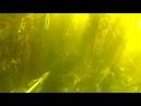 Подводная охота на раскатах волги Spearfishing on the rolls of the Volga