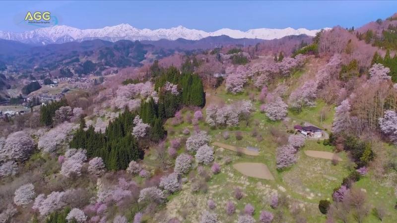 Япония 信州小川村 二反田の桜 - Cherry Blossoms at Nitanda - (shot on Phantom 4 pro and Samsung NX1)