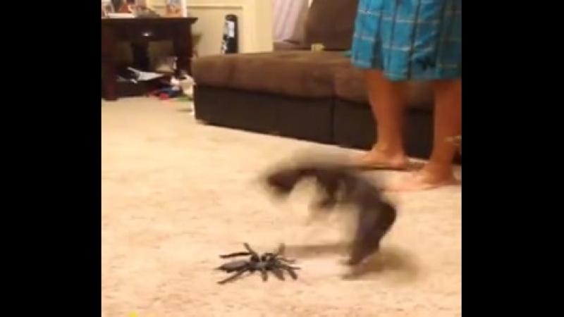 Пауков боишься