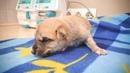 Щенок выжил после того как кто то пытался его убить Чудесное спасение До слез rescuing a puppy