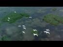 Полет птиц. Очень красивое видео