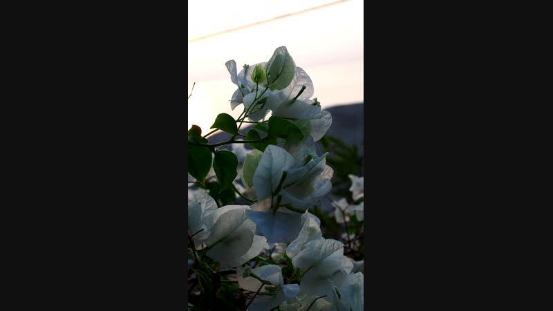 15112018 Рассвет в Эйн Геди (Мёртвое море)