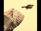 Kenny G feat. Yolanda Adams - I believe I Can Fly