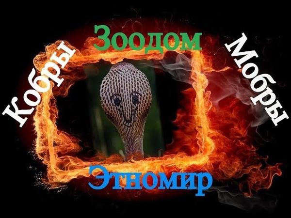 Этномир Зоодом Кобры Мобры