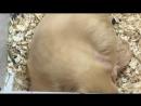 помет хурма новорожденный