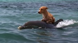 DOLPHIN &amp DOG SPECIAL FRIENDSHIP - Vangelis Song Of The Seas
