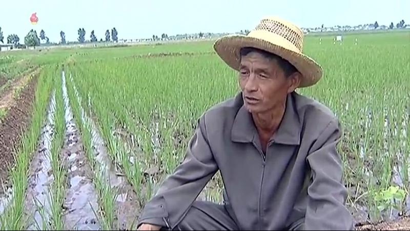농작물비배관리를 자체실정에 맞게 -력포구역 협동농장들에서-