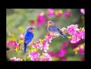 Счастлива будь и вся в цветах ...