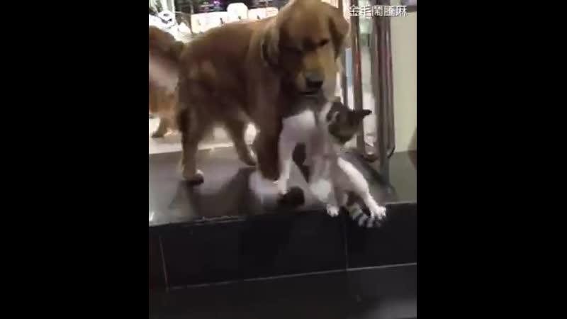 Дружная семейка