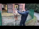 В Турции мужик пришел в зоопарк несколько минут задирал кенгуру. Хотя, на самом деле это кенгуру пришел в зоопарк