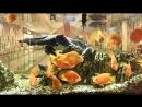 Рыбки, релакс