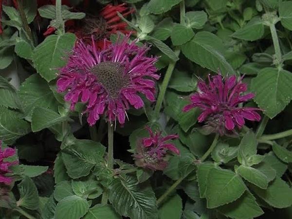 «Марий Эл Телерадио»: В Йошкар-Оле прошла традиционная выставка цветов