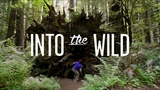 Into The Wild Tempest Freerunning Redwood National Forest