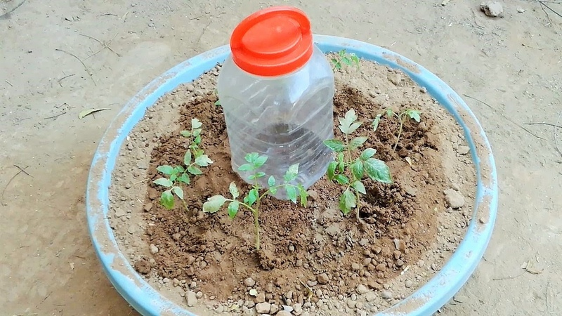 Plastic Bottle drip watering system simple and easy for plants using waste plastic bottle