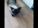 тот момент, когда у тебя кошка жуть какая ревнивая 😂😂😂