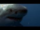 Самые опасные животные. Безумные акулы. National Geographic. 2017. HD