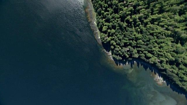 BBC: Морские гиганты: Голоса гигантов (2011)