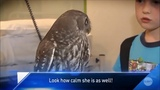 Nelly the bullied owl