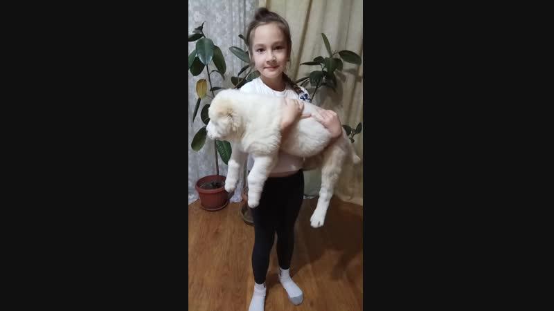 девочка, фиолетовый ошейник 54 дня питомниксарыдагдан