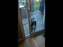 Впустите!.. а впрочем...