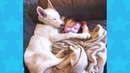 BABY AND DOG SLEEPING HOW TO WAKE THEM UP - Dog loves Baby Compilation